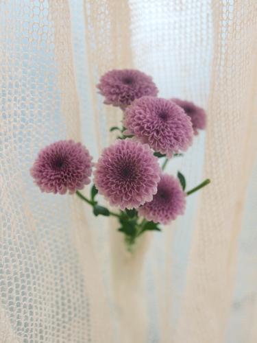 Akane Moriyama_Draped Flower_05