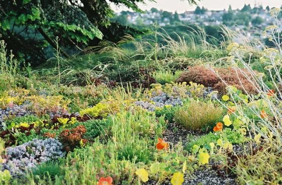 HarrisonArchitects_GreenRoof_09