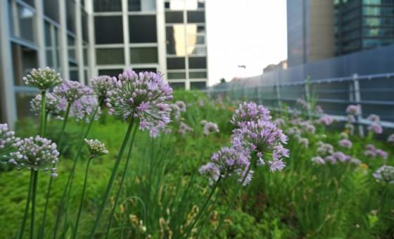 HMWhite_Midtown Manhattan Sky Garden_07