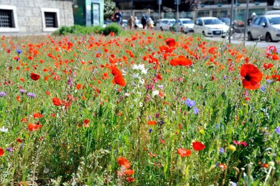 Biodiversity_Milan_02