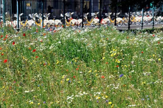 Biodiversity_Milan_08